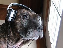 Image: Buddy wearing headphones