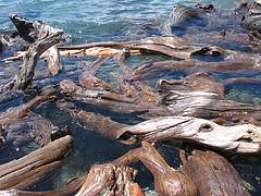 Image: Driftwood